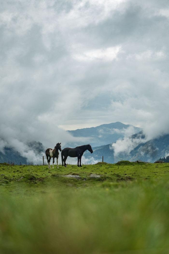 Koně na Hintersee