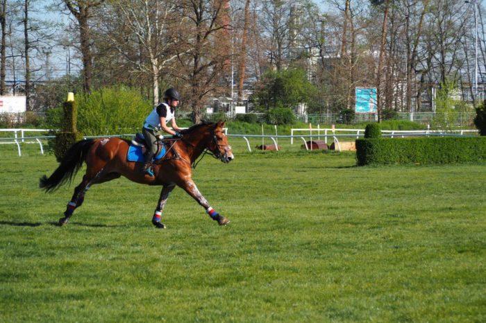 Kůň - závodiště Pardubice