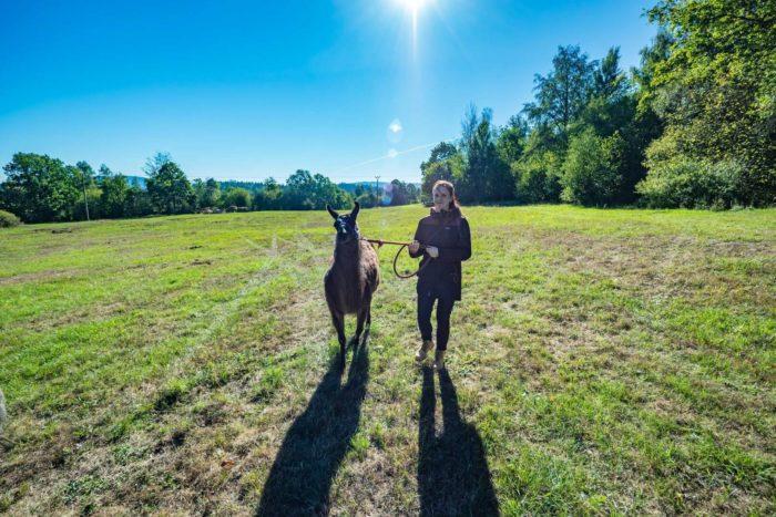 Lama a Mařenka - Lamadorado