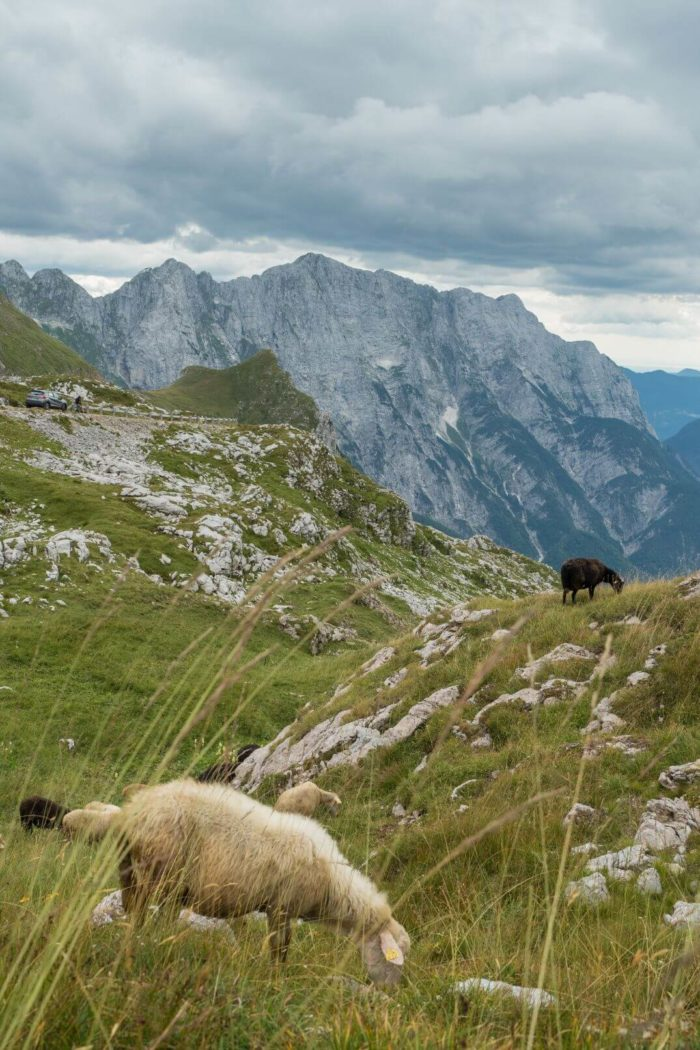 Ovce - Mangart Slovinsko