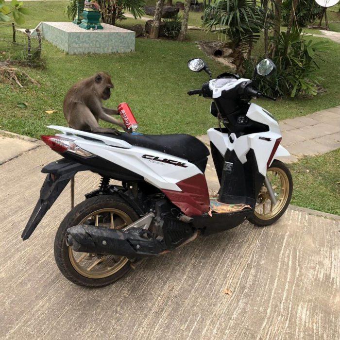 Opice na motorce :) v Thajsku - Koh Lanta