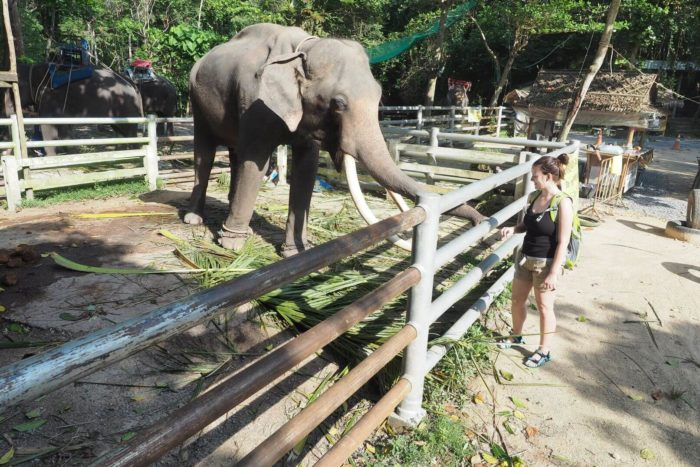 Slon v Thajsku na Koh Samui