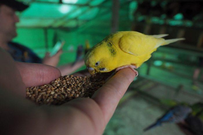 Pták - odborně řečeno - Thajsko